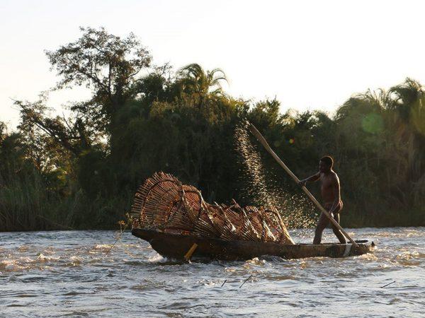 Royal Chundu Zambezi River Lodge Parrotfish Run