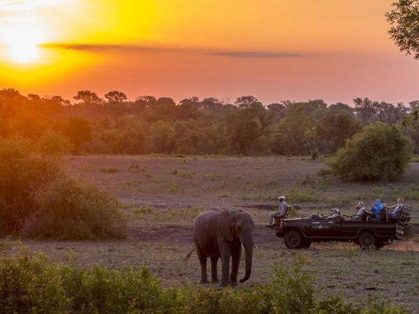 Sabi Sabi Bush Lodge Safari