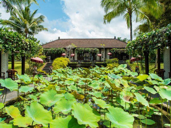 The Chedi Club Tanah Gajah Ubud Lotus pond