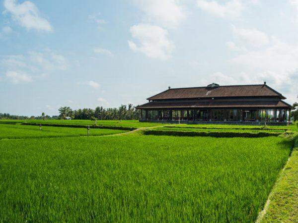 The Chedi Club Tanah Gajah Ubud Rice