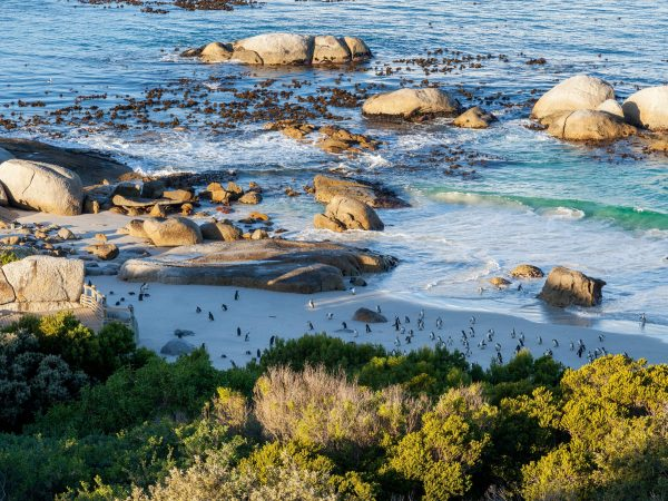 Tintswalo at Boulders beach View1