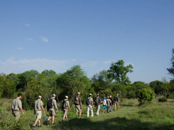 sabi sabi Earth lodge Walking safari