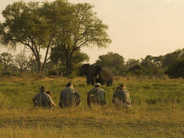 African Bush Camps Linyanti Bush Camp Game Drives