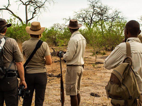 African Bush Camps Linyanti Bush Camp Walking