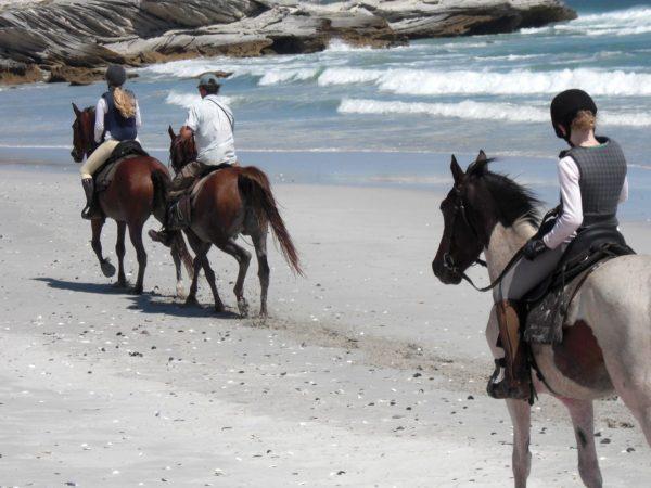 Birkenhead House Horseback Riding
