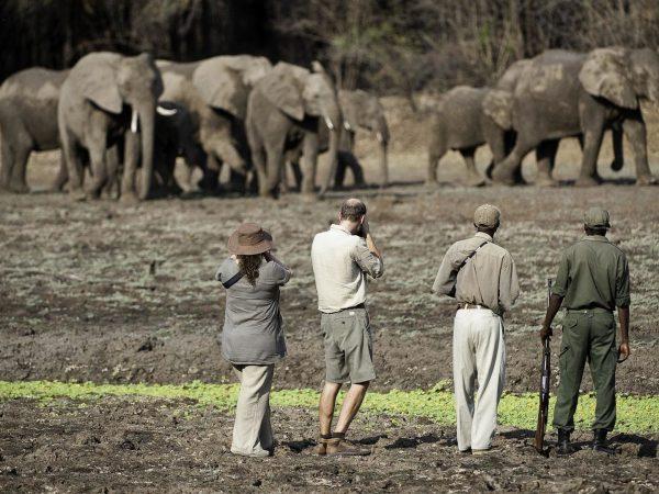 Chindeni Bushcamp Walking Safaris