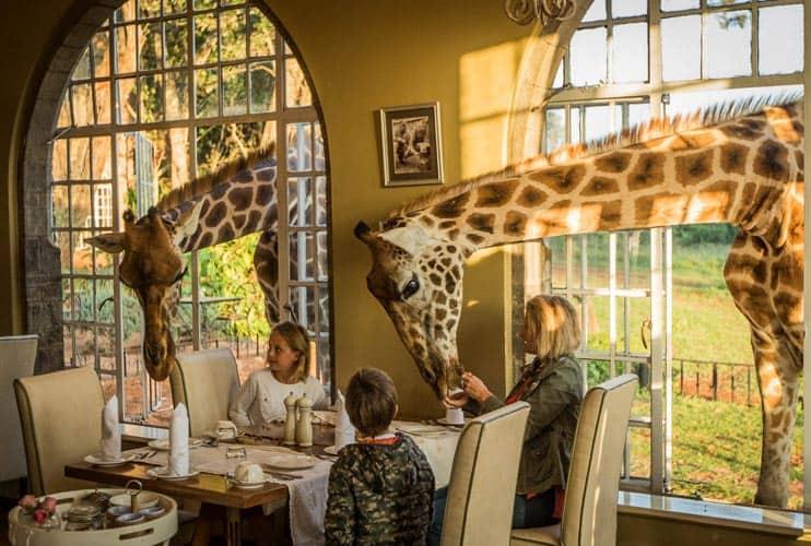 Giraffe Manor Nairobi Breakfast Dining