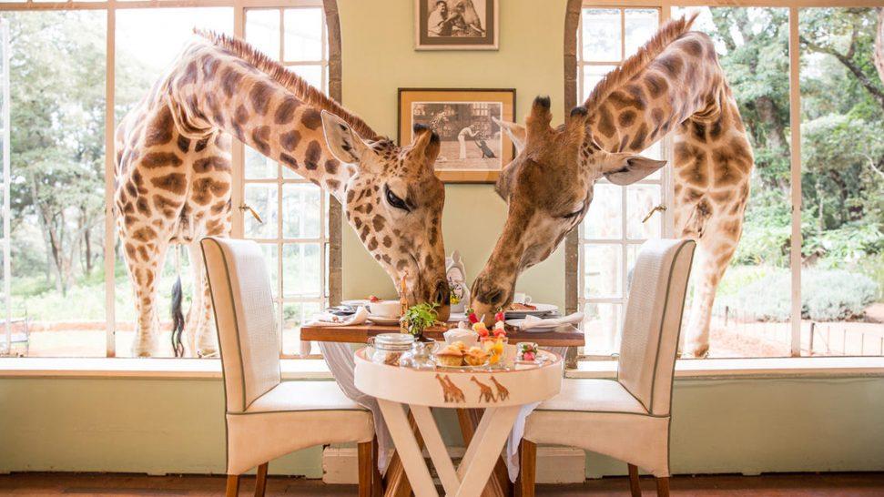 Giraffe Manor The most unique breakfast