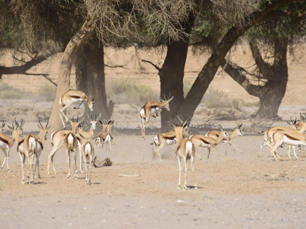 Hoanib Skeleton Coast Camp Day Trips to Desert Oases