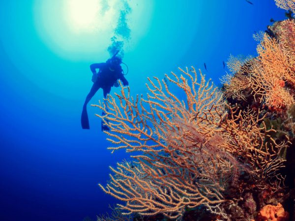 Kokomo Private Island Resort Discover Scuba Diving