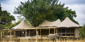 Little Mombo Camp, Okavango Delta