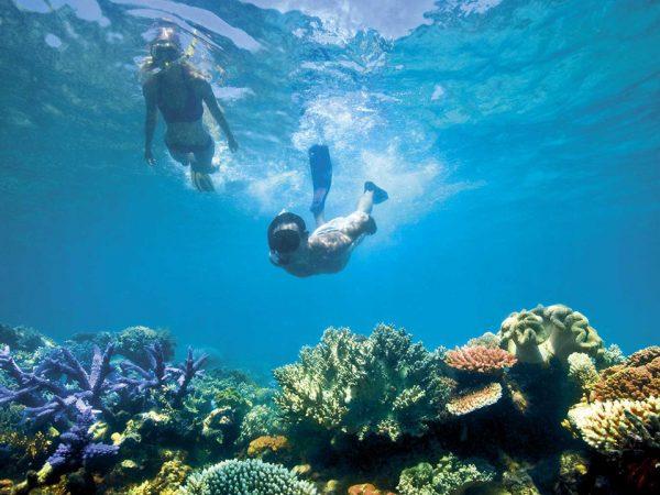 Lizard Island Resort Snorkelling