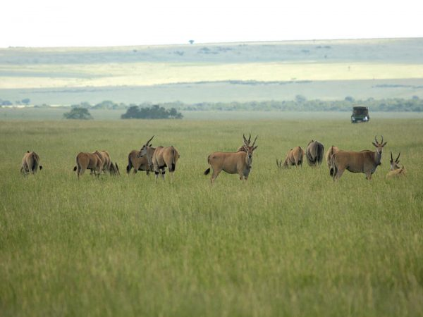 Mara Plains Camp Cultural Visits