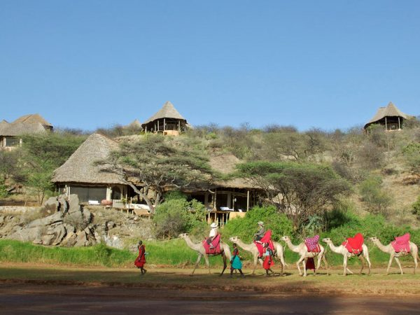 Sasaab Samburu Camels Infront of the Lodge