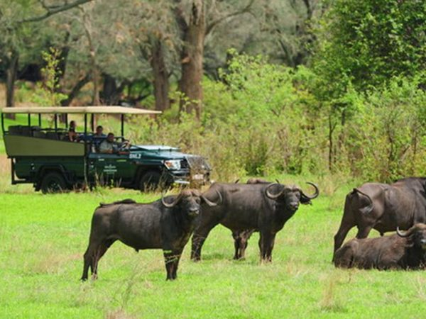 Victoria Falls Hotel Safari Activities