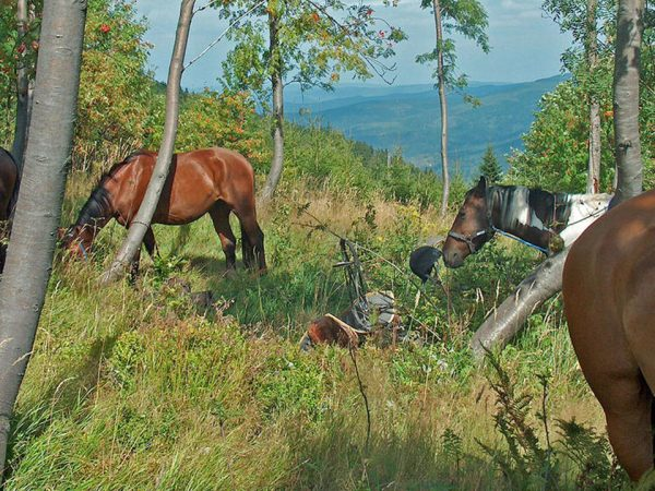 Cape Lodge Horse Riding