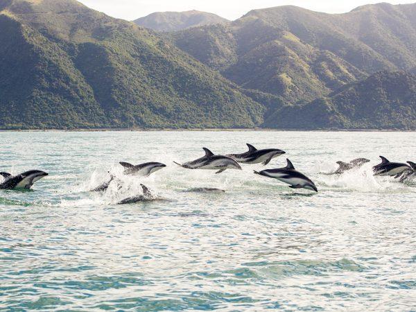Hapuku Lodge Tree House Dusky Dolphins