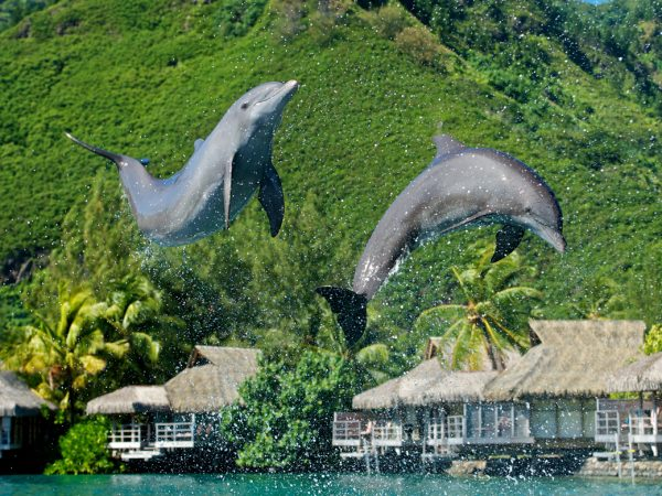 InterContinental Resort And Spa Moorea Dolphin Center