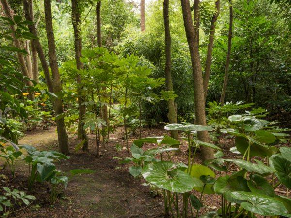 Otahuna Lodge Woodland Header