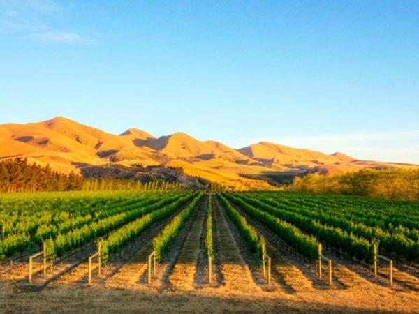 Otahuna Lodge vineyards