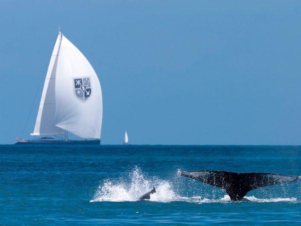Qualia Keelboat Regatta