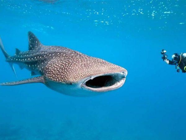Thanda Island Scuba Diving
