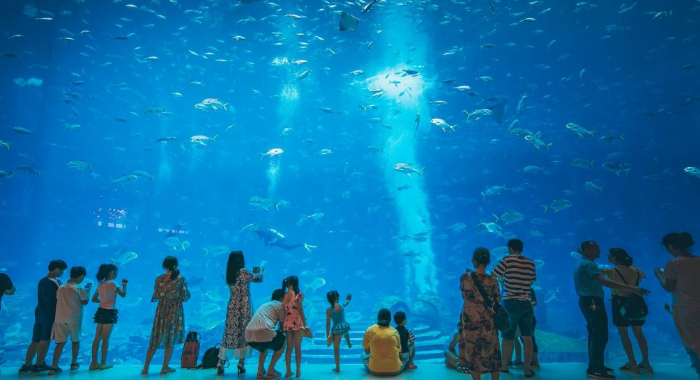 Atlantis Sanya The Lost Chambers Aquarium