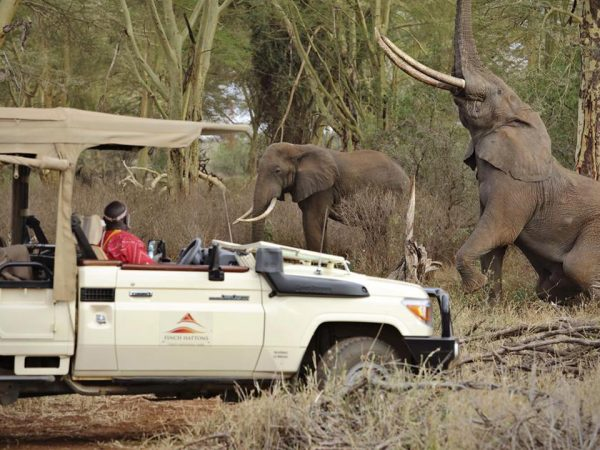 Finch Hattons Luxury Tented Camp Game Drives