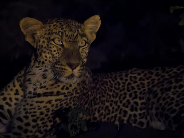 Finch Hattons Luxury Tented Camp Night Game Drives