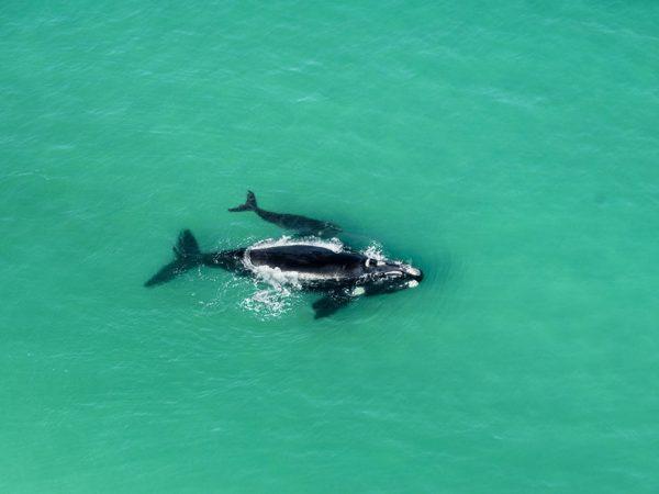 Morukuru Ocean House Land based whale watching