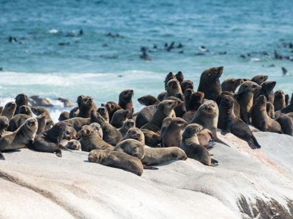 Shipwreck Lodge Day excursions to Mwe Bay seal Colony