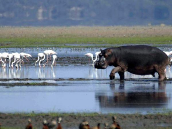 Thanda Safari Hippo and Croc Cruise