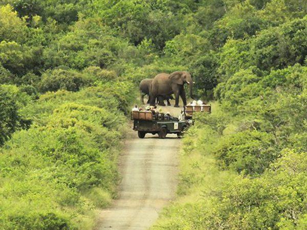 Thanda Safari Lobby