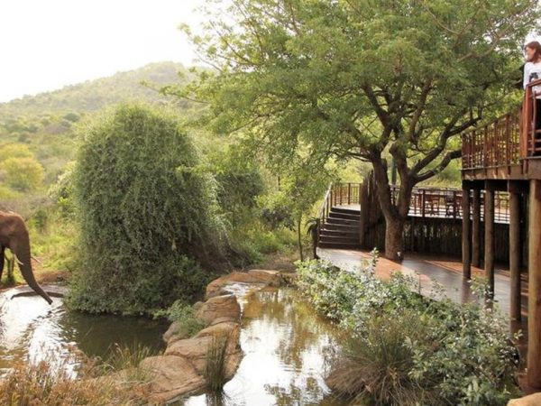 Thanda Safari Lobby View