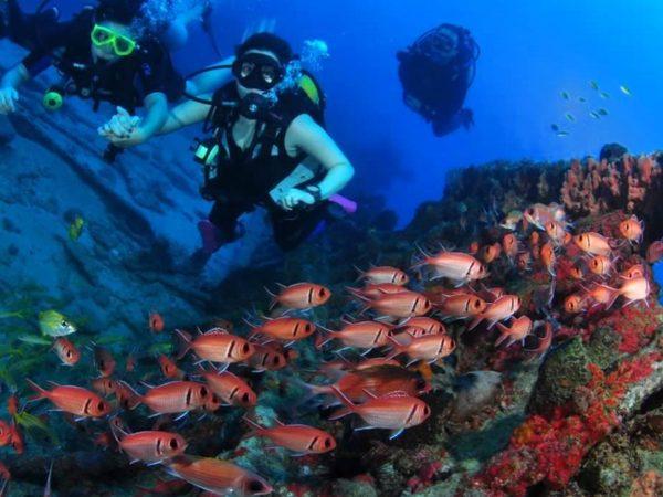 Ayana Lako dia Diving and Dive Safari