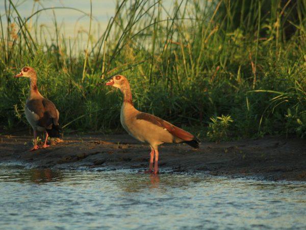 Anabezi Camp Bird Watching