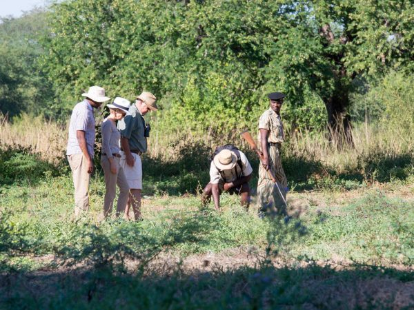 Anabezi Camp Walking Safaris