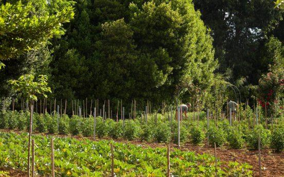 Chteau de Valmer The Organic Vegetable Garden