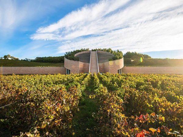 L'Andana Wine Experience