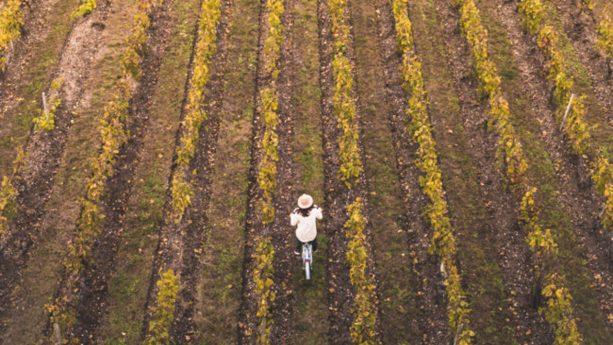 Les Sources De Caudalie Bike, Walk and Jogging