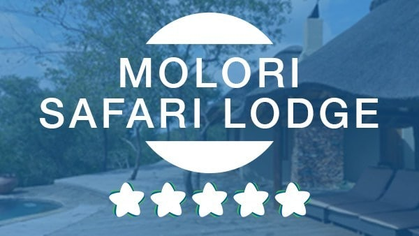 Molori Safari Lodge Featured logo