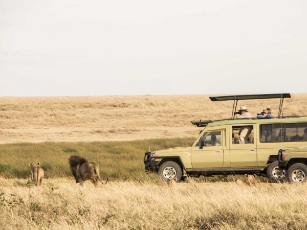 Namiri Plains Camp Game drives