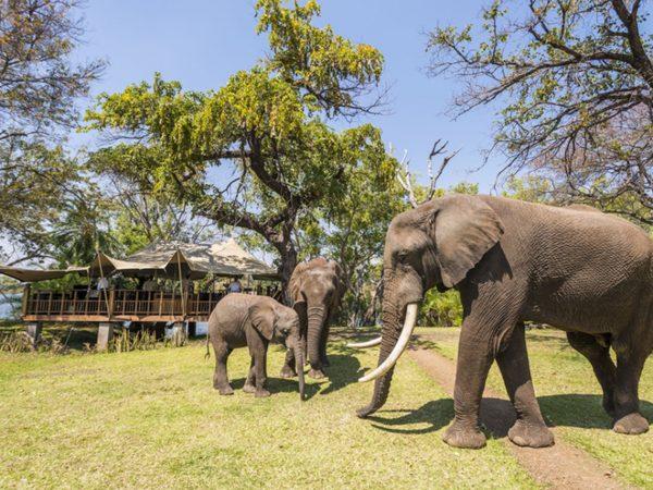 River Club Safari Lodge Wildlife