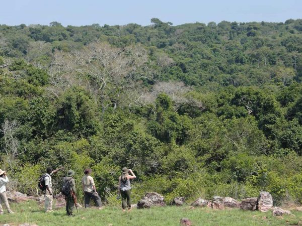 Rubondo Island Chimpanzee Trekking and Habituation