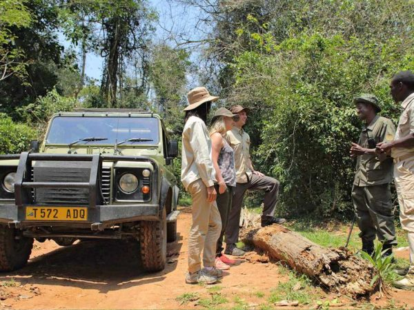Rubondo Island Family Safari