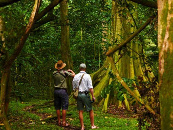 Rubondo Island Forest Walking