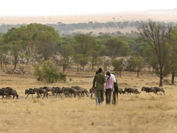 Sayari Camp Walking Safari