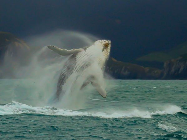 The Marlborough Lodge Whale Watching