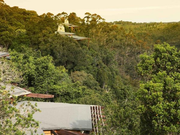 Tsala Treetop Lodge Forest View