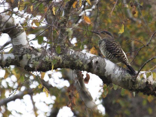 andBeyond Vira Vira Birdwatching